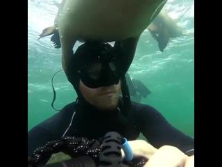 Подводные жители Севера. (Териберка)