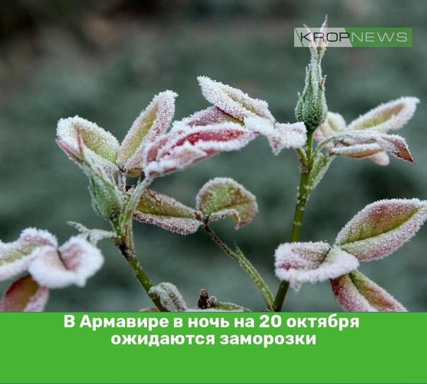 В Армавире в ночь на 20 октября ожидаются заморозк...