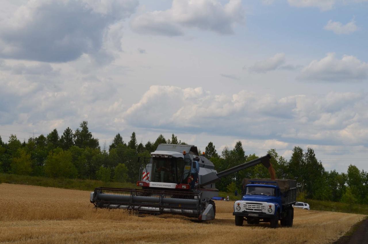 Намолот зерна в Саратовской области подходит к отметке в два миллиона тонн