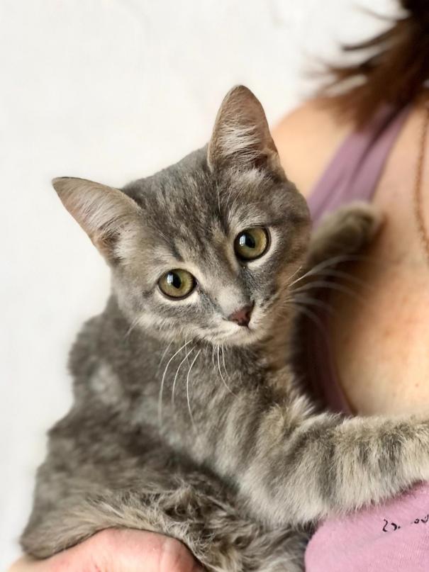 Ищет дом маленький котик, ему примерно 4 | Объявления Орска и Новотроицка №18348