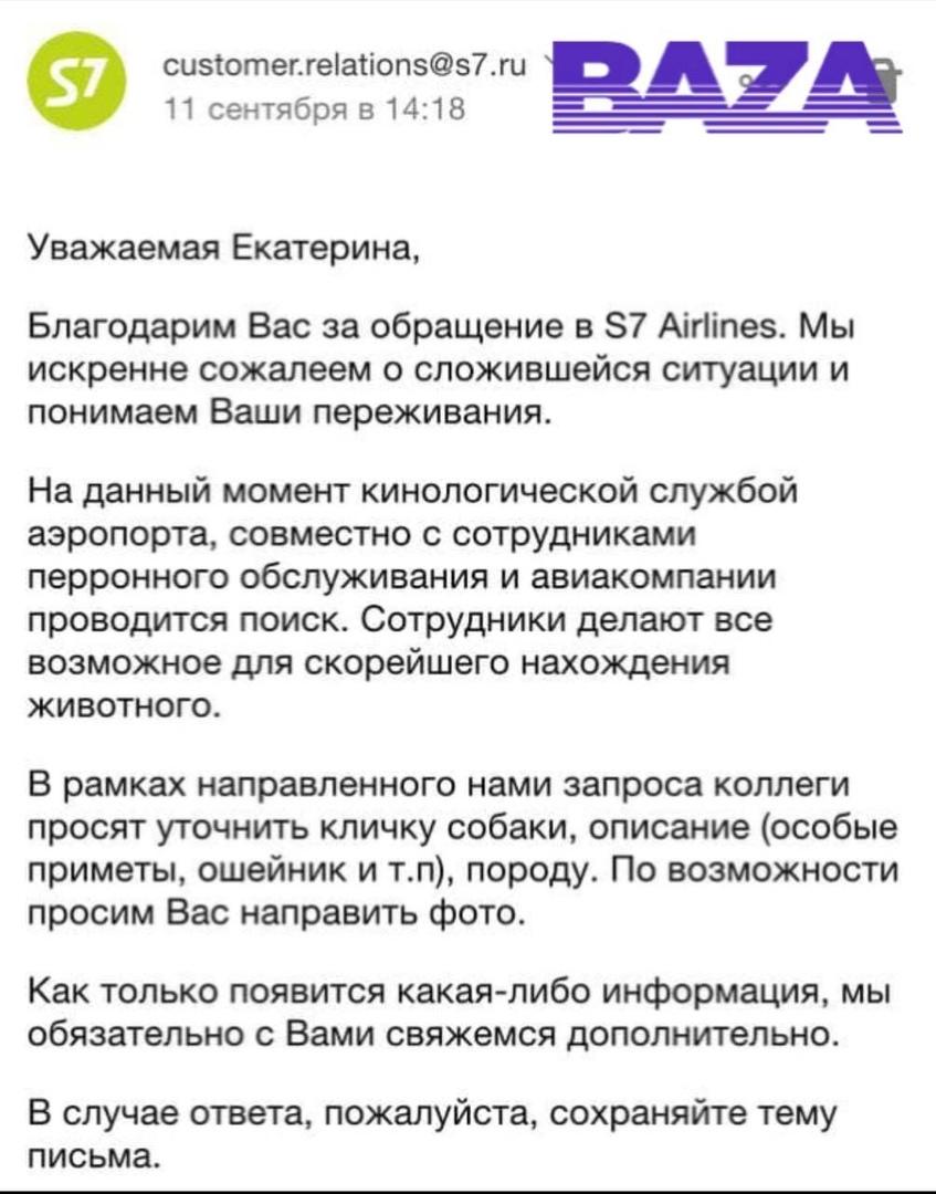 Сотрудники аэропорта Домодедово потеряли собаку, которая должна была лететь в Симферополь.  10 сентя...