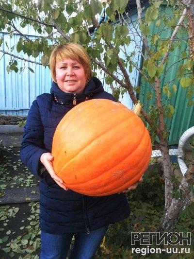 Сказочная тыква, гигантская морковь и синьор-помид...