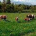 Прайс-лист на семена кормовых травосмесей производства ГК «АгроВелес» май 2021, image #2