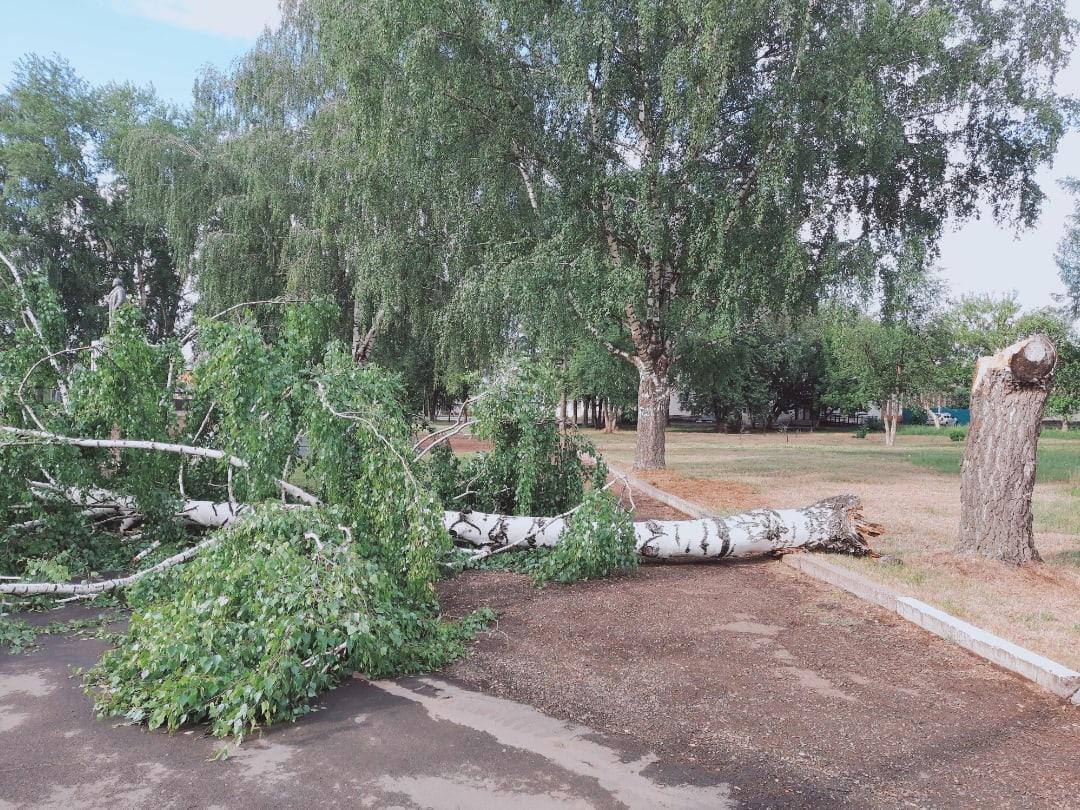 Напротив ДДТ упало дерево. Ленин вроде не