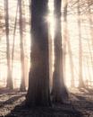 Магия света в фотографиях американского фотографа Michael Shainblum