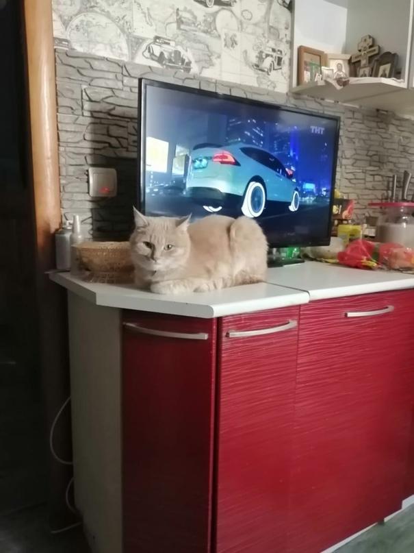 Отдам в добрые руки кота. Добрый, к лотку | Объявления Орска и Новотроицка №17890