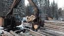 Погрузка древесины в лесу трактором ЛТ-72 Мультик лесоштабелёр лесопогрузчик ЛТ- 72