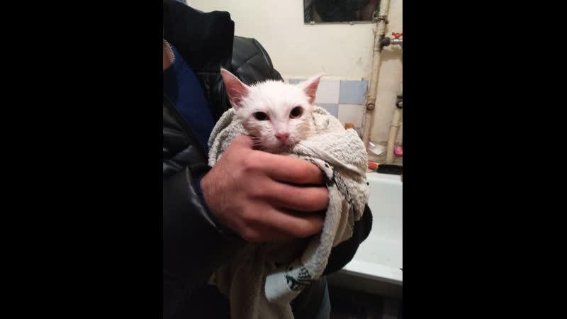 Котик был уже покрыт льдом но мужчина его отогрел под курткой