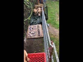 полоса препятствий для щенков