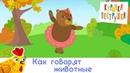 Как говорят животные - КУРОЧКА-ПЕСТРУШКА развивающая песенка мультик для детей малышей про животных