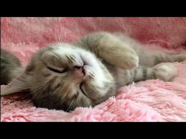 Funny kittens sleep in cute and funny poses Смешные котята спят в милых и забавных позах