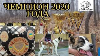 Шаг за шагом Кувват стал Чемпионом Украины 2020 года / Alabai