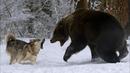 СОБАКИ В ДЕЛЕ! Собака против медведя, змеи, хулиганов