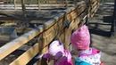 Дети в зоопарке. Пони, олень, павлины.