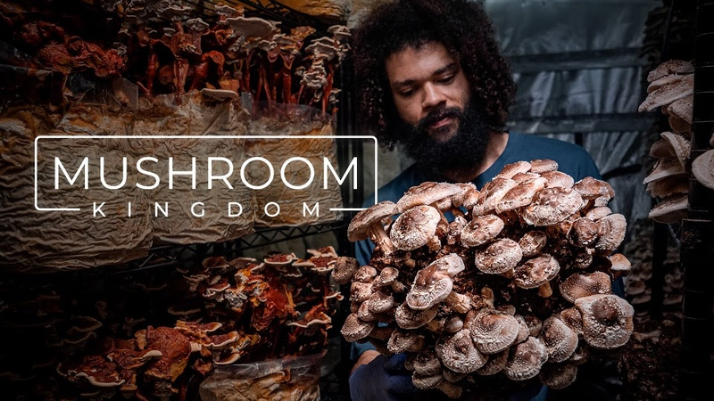 Cultivating Gourmet and Medicinal Mushrooms PARAGRAPHIC