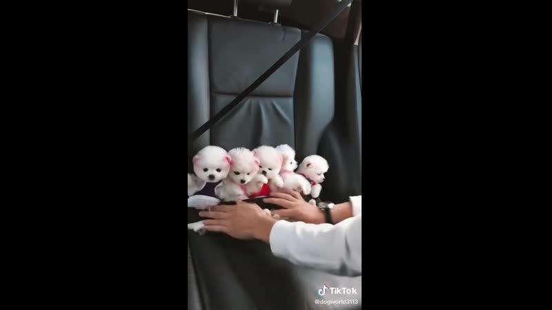 VIDEO 2020 07 05 12 17
