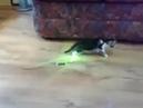 Aliens attack! · coub, коуб
