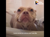 This Pit Bull Has The World's Best Smile