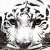 Тигрунька Полосатый