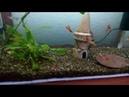 Зеленеют стенки аквариума ? 100% решение проблемы