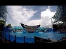 SEAWORLD ORLANDO FLORIDA - MEET SHAMU (ORCA) THE KILLER WHALE