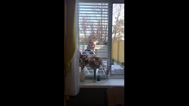 Video 0dac2a407e5defd3fcfb2ef33d777db0