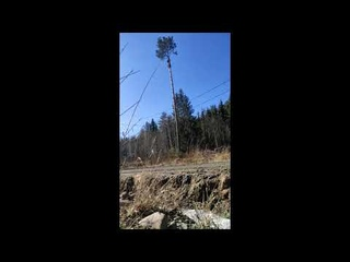 Спил дерева по частям. Арбористика.