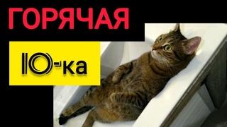 ГОРЯЧАЯ 10-ка Мест где можно найти свою кошку / TOP 10