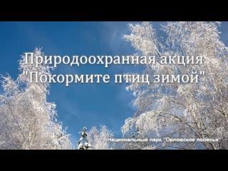 Покормите птиц зимой_Природоохранная акция