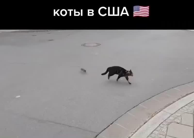 Наши коты 💪🏻💪🏻💪🏻