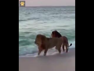 Все любят море
